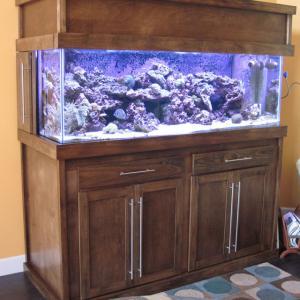 REEFLECTIONS AQUARIUM - 18 Photos - Local Fish Stores - 8970 103rd St,  Jacksonville, FL - Phone Number