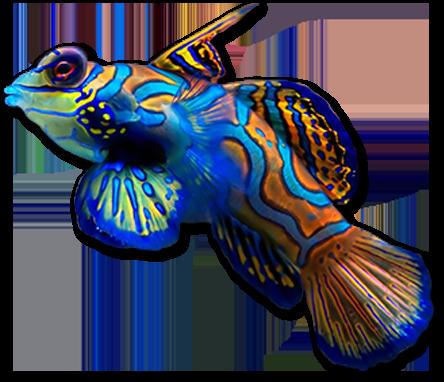Marine Aquarium Fish | Marine Aquariums Saltwater Fish Jacksonville Coral Logic