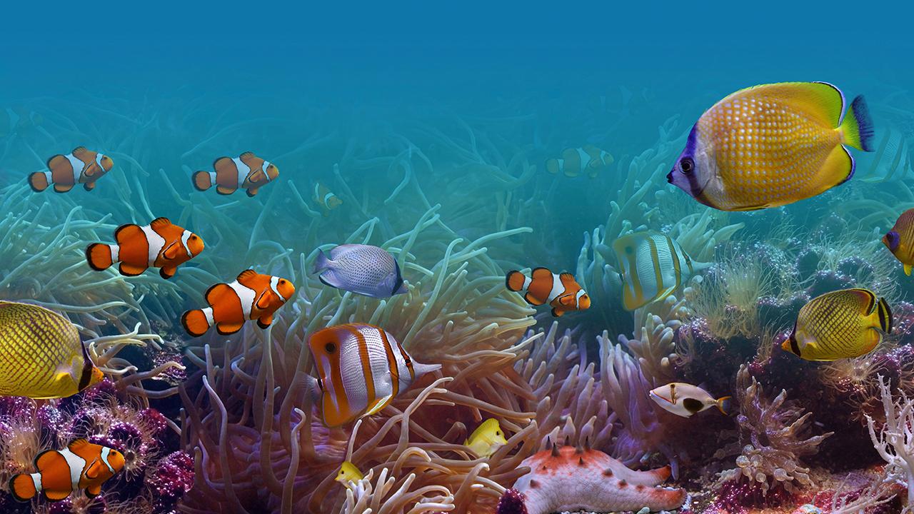 Freshwater aquarium fish jacksonville fl - Freshwater Aquarium Fish Jacksonville Fl