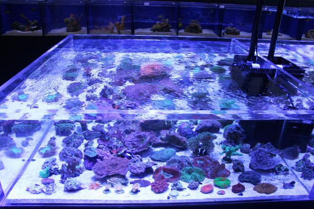 Custom Marine Aquariums Tanks Jacksonville Fl